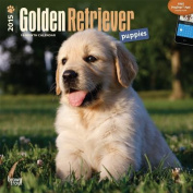 Golden Retriever Puppies 2015 Wall