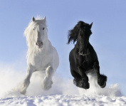 Horses Faces Off Black and White Canvas Wall Art Print, Startonight Animals 80cm X 80cm