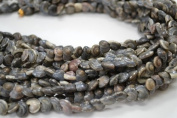 Drilled Hole Black Pearl Umbonium Sea Shell Beads 1/4 Pound