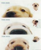 THE DOG Artlist - Peek-a-boo Golden Ret. Stickers