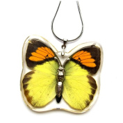 HD08 REAL Butterfly Necklace