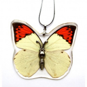 HD04 REAL Butterfly Necklace
