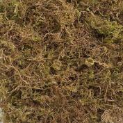 410 Cubic Inc Moss
