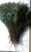 10pcs High Quality Real Natural Peacock Feathers About 10-30cm
