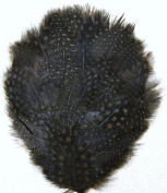 6 Pcs Guinea Pheasant Feather Pads - BROWN