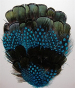6 Pcs Dyed Guinea w/ Natural Black Pheasant Pads - TURQUOISE Feathers