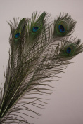 Natural Peacock Feathers 80cm - 90cm Long