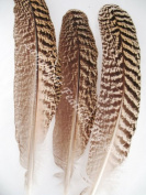 Peacock Wing Quills, Large Mottled Peacock Feathers, 25cm & Up, Per 4 Pack