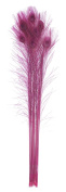 Zucker Feather Products Bleached and Dyed Peacock Eye, Shocking Pink