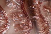 Copper Eyelash Polyester Organza Fabric with Fancy Pattern, 140cm Sold By the Yard