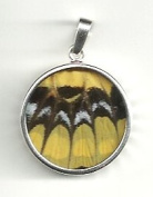 Reversed American Swallowtail Butterfly Wing Medium Round Pendant