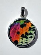 Sunset Moth Butterfly Wing Medium Round Pendant