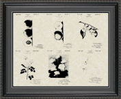 Luther Burbank Botanist Patent Art Collection 20x24   Gardener Farmer Print Gift