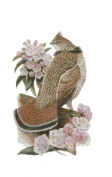 Pennsylvania State Bird and Flower Ruffed Grouse and Mountain Laurel Counted Cross Stitch Pattern