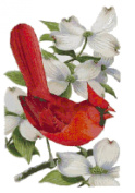 Virginia State Bird and Flower Northern Cardinal and American Dogwood Counted Cross Stitch Pattern