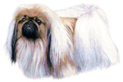 Pekingese Dog Counted Cross Stitch Pattern