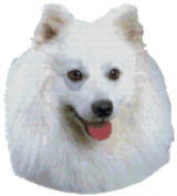 American Eskimo Dog Portrait Counted Cross Stitch Pattern