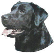 Black Labrador Retriever Dog Portrait Counted Cross Stitch Pattern