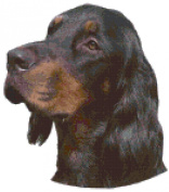 Gordon Setter Dog Portrait Counted Cross Stitch Pattern