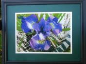 Purple Iris in a Sunny Barrel (Pattern Only