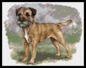 Border Terrier No2 Counted Cross Stitch Kit