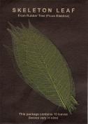 Skeleton Leaves- Pack of 10 Green Rubber Tree Leaves