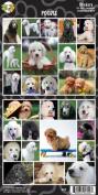 Pet Qwerks S57 Poodle Sticker