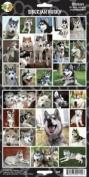 Pet Qwerks S42 Siberian Husky Dog Sticker
