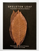 COPPER RUBBER TREE LEAVES - Pack of 10 skeleton leaves