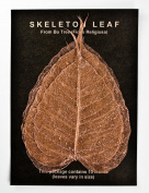 COPPER BO LEAF - Pack of 10 skeleton leaves