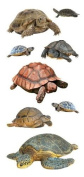 Paper House Productions Photo Real Stickypix Stickers, 5.1cm , Turtles