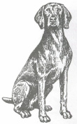 Dog Rubber Stamp - Weimaraner-1E (Size