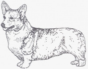 Dog Rubber Stamp - Welsh Corgi Pembroke-2E (Size