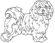 Dog Rubber Stamp - Havanese-1E (Size