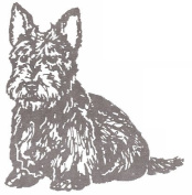 Dog Rubber Stamp - Scottish Terrier-1E (Size