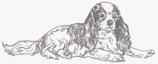 Dog Rubber Stamp - Cavalier King Charles-1E (Size