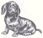 Dog Rubber Stamp - Dachshund-1E (Size