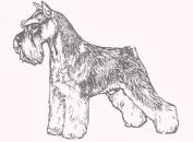 Dog Rubber Stamp - Schnauzer-1E Minature (Size
