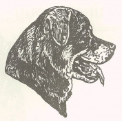 Dog Rubber Stamp - Rottweiler-10E (Size
