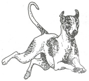 Dog Rubber Stamp - Whippet-4E (Size