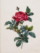 """The World of beautiful flowers Redoute"" COSMO cross stitch kit No.803 Rosa Garika"