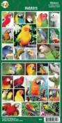 Pet Qwerks S63 Parrots Sticker