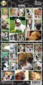 Pet Qwerks S56 Pitbull Sticker