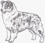 Dog Rubber Stamp - Australian Shepherd-1F (Size