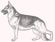 Dog Rubber Stamp - German Shepherd-1F (Size