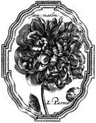 LaBlanche Silicone Stamp LB1171