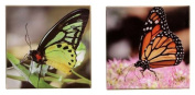 Gift Craft 30cm Polyester Canvas Butterfly Design Outdoor Wall Prints, Medium, 2-Pack