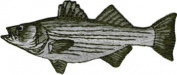 Trout Fish - Green And Grey - Embroidered Iron On Or Sew On Patch