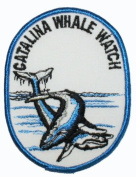 Catalina Whale Watch Travel Souvenir Patch