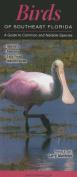 Birds of Southeast Florida